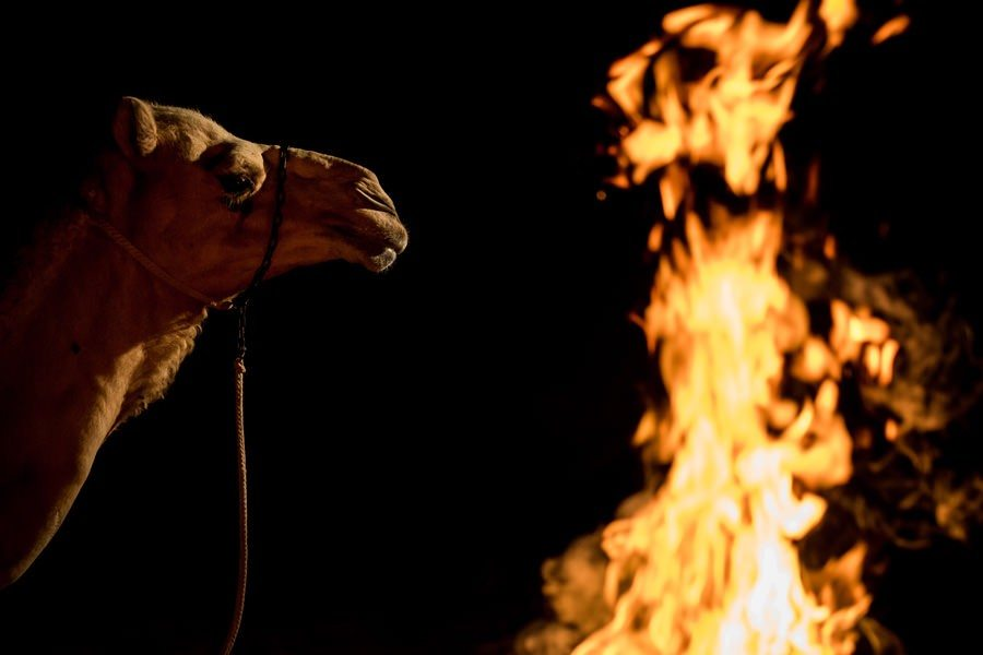 A camel by the fire in the Empty Quarter.